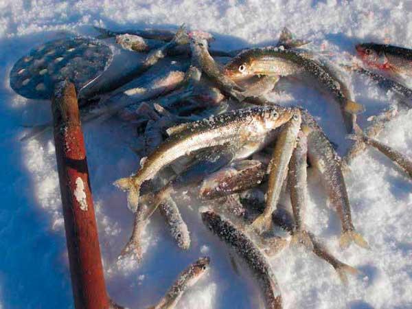рыбалка в беломорске на белом море дикарем